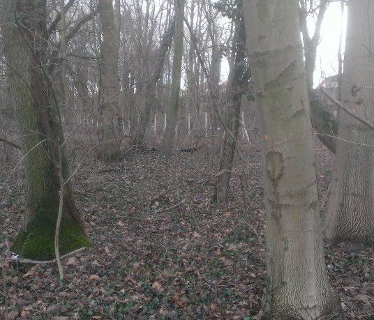 Keď sa v Rusovciach rúbe les...
