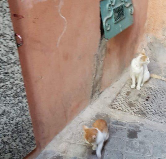 Čo s mačkami na ulici?
